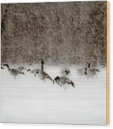 Canada Geese Feeding In Winter Wood Print