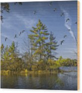 Canada Geese Flying By A Small Island On Hall Lake Wood Print