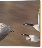 Canada Geese In Flight Wood Print
