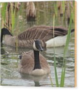 Canada Geese In Pond Wood Print