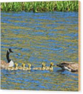 Canada Geese With 5 Goslings Wood Print