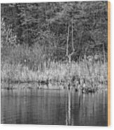 Canada Goose Couple Bw Wood Print