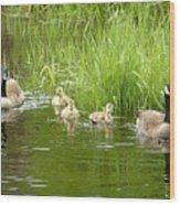 Canada Goose Family 2 Wood Print