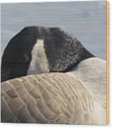 Canada Goose Head Wood Print