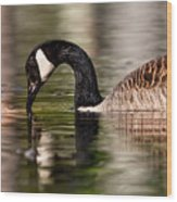 Canada Goose Reflections Wood Print