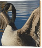 Canada Goose Spreading The Wings Wood Print