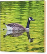 Canada Goose Swimming In A Pond Wood Print