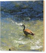 Wildlife Scenes #3 Wood Print