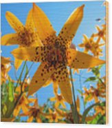 Canada Lily Wood Print