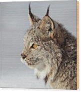 Canada Lynx Up Close Wood Print