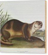 Canada Otter Wood Print