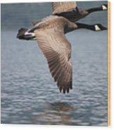 Canada's Goose Wood Print