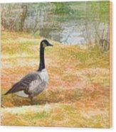 Canadian Geese 6 Wood Print