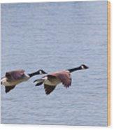 Canadian Geese In Flight Wood Print