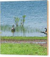 Canadian Geese - Wichita Mountains - Oklahoma Wood Print