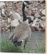 Canadian Goose By The River Wood Print