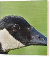 Canadian Goose Portrait Wood Print