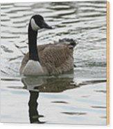 Canadian Goose Wood Print