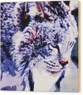 Canadian Lynx 1 Wood Print