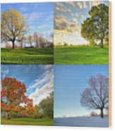 Canadian Seasons Wood Print