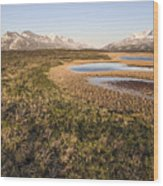 Canadian Tundra In Evening Light. Wood Print