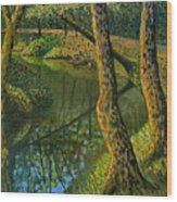 Canal In Sunlight Wood Print