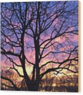 Canal  Winter Sunset  Pt Wood Print