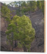 Canary Pines Nr 4 Wood Print