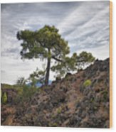 Canary Pines Nr1 Wood Print