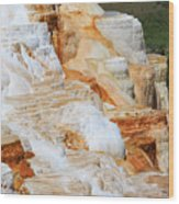 Canary Spring Mammoth Hot Springs Upper Terraces Wood Print