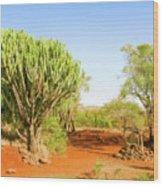 candelabra euphorbia tree Euphorbia candelabrum, Kenya Wood Print