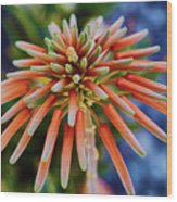 Candelobra Aloe In San Diego Wood Print