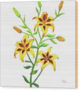 Candy Cane Lily Wood Print