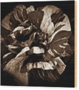 Candy Stripe Rose Sepia  Wood Print