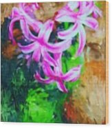 Candy Striped Hyacinth  Wood Print