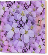 Candytuft Wood Print by Mary P. Siebert