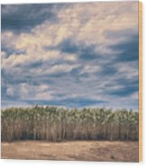 Cane Thicket Wood Print