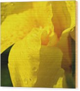 Canna At Sunrise Wood Print