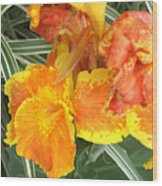 Canna Lilies Wood Print by David Bearden