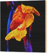Canna Lilies On Black With Blue Wood Print