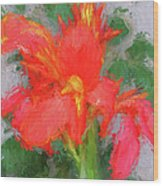 Canna Lily 3 Wood Print