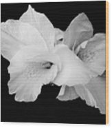 Canna Lily In Black And White Wood Print