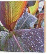 Canna Lily I  Wood Print