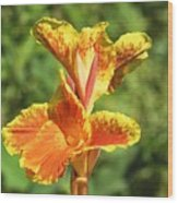 Canna Lily Wood Print by Kenneth Albin