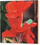 Canna Lily 'lucifer' Wood Print