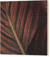 Canna Leaves Wood Print