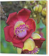 Cannonball Tree Flower-st Lucia Wood Print