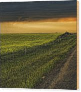 Canola And The Road Ahead Wood Print