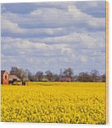 Canola Field Wood Print