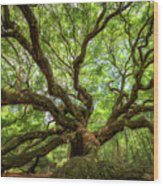 Canopy Of Color At Angel Oak Tree  Wood Print